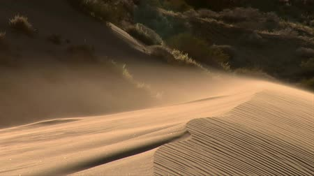 deserto : ripples of sand flow on top of sand dune