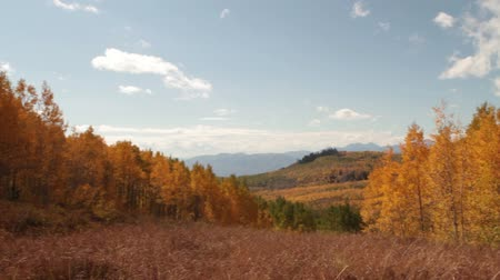 блестящий : pan across mountain meadow with yellow aspens