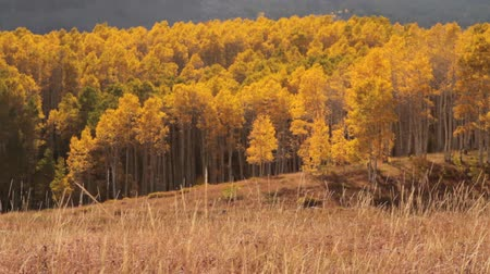 блестящий : Pan across mountain meadow with yellow aspens and Indian tepee