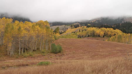 блестящий : pan across mountain meadow with yellow aspens and forest