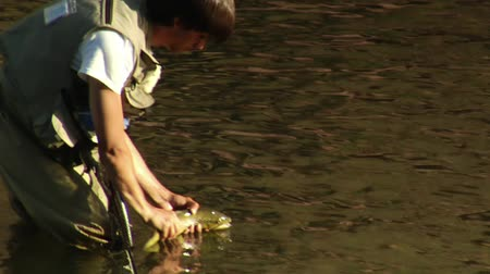ловушка : young man fly fishing catches and releases large trout