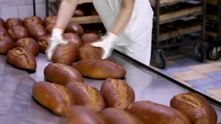 grain bread : Bakehouse. Rows of fresh bread loafs lying on the shelf.Baking bread process. Food industry and production.