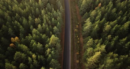 spruce forest : Aerial Footage Over Pine Forest with the Road in the Middle of it , Camera Follows the Road, Slowly Panning