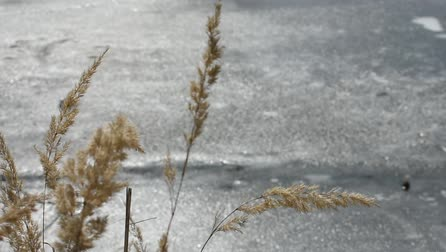 bege : Dry Grass near the Ice Pond