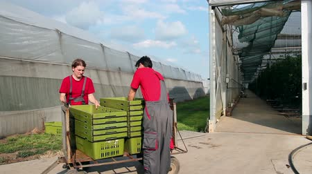 munkás : Greenhouse workers at work outside the commercial greenhouse. HD1080p.