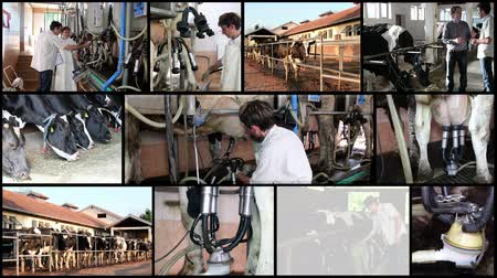 farm equipment : Modern Dairy Farm