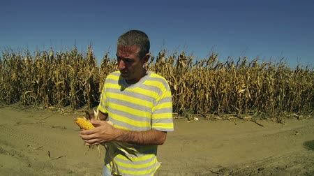 rolnik : Farmer Checking his Corn Crop