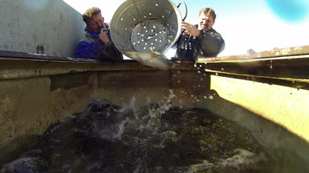 fish farm : Fishermen Sorting Fish. Group of workers preparing fresh fish for the fish market. Stock Footage