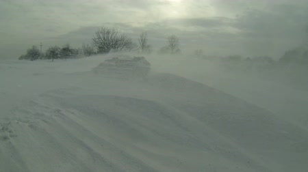 deep snow : Winter Snow Storm Scene. Poor visibility with strong winds blowing snow around during a snow storm.