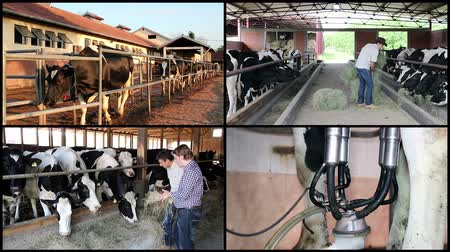 farm equipment : Milk Production at Dairy Farm
