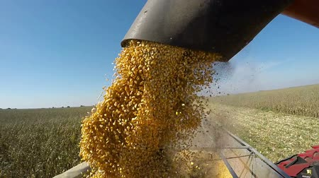 трейлер : Corn Harvest Unload into Semi Trailer