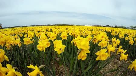 narciso : Beautiful outdoor scenery in Netherlands