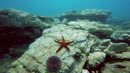 five stars : Underwater Shot of Marine Life With Star Fish and Sea Urchin Stock Footage