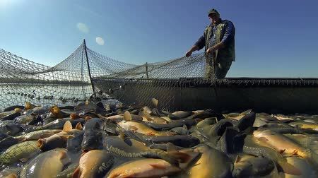 waders : Commercial Fishing - Harvesting Fish at Fish Farm
