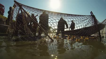 waders : Fishermen Using Fishing Nets - Freshwater Fish Farming Stock Footage