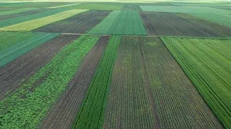 árpa : Aerial View Of Agricultural Green Fields Stock mozgókép