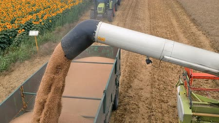unload : Grain Falling from Combine Auger into Tractor Trailer