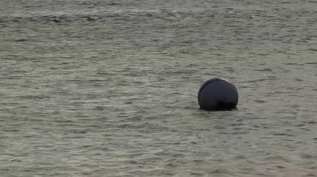 bóia : Buoy in the water