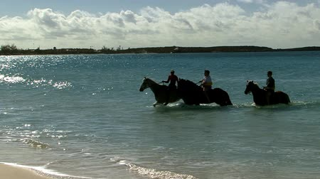 Silhouette of Horses on a beach