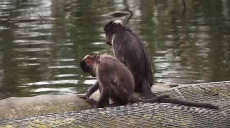 Small Monkeys by the water Stock Footage