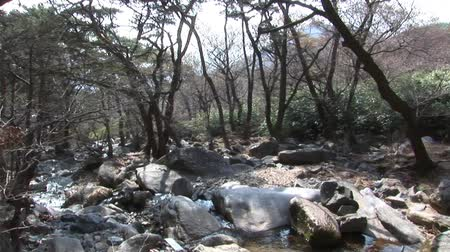 South Korea Woodland & River