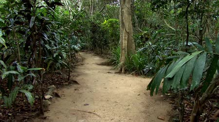 South Pacific Jungle Path
