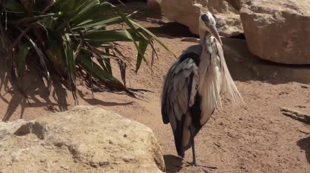 Танзания : Stork Bird washing