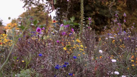 settings : Wild Flowers In England Autumn Stock Footage