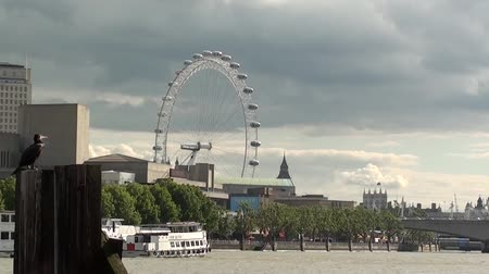 London Eye Stok Video