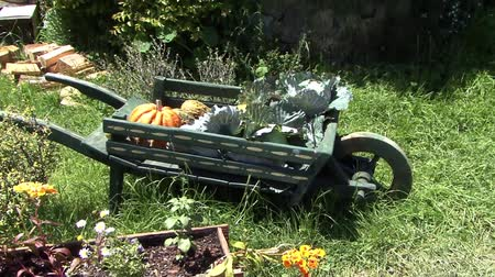 vazo : Wheel barrow with flowers