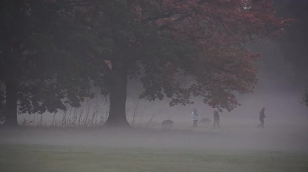 autumnal : Misty English Countryside