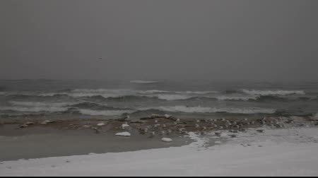 baltık : Winter sea scene with seagulls flying away Stok Video