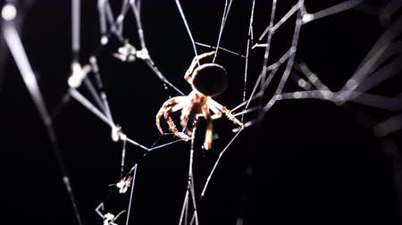 compelling : Spider spins a web in macro