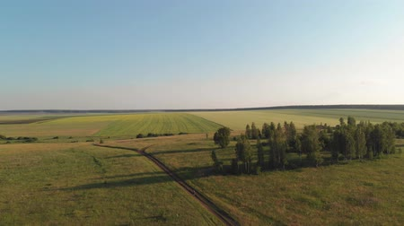 Aerial View. Flight over a green grassy hills in sunset light