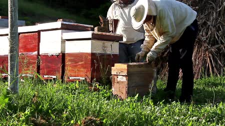 sérvia : Work in apiary. Two beekeepers are on spring checking of all details in their apiary.