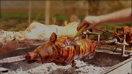 porky : Cook is checking with knife is the pig cooked. Roasting pig is prepared for festivities to sale. Pig is over fire pit being automatically turned. Stock Footage