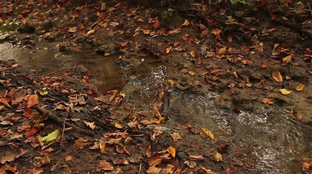 boggy : Small muddy creek, stream. Autumn colorful leaves are in small muddy creek.