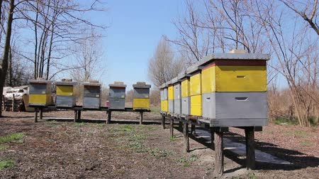 levantado : Row of beehives on wooden pillars lifted up, apiary, Bee farm Wooden colorful beehives in a row are placed on wooden construction lifted off the ground.