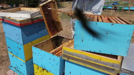 besom : Beekeeper is using bristle to get rid of bees  Apiarist sweeps out bees from honeycomb with brush to extract honey, harvest time.