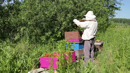 улей : Beekeeper is taking out the honeycomb on wooden frame to control situation in bee colony. Стоковые видеозаписи