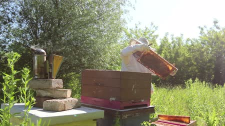 улей : Beekeeper is looking swarm activity over honeycomb on wooden frame, control situation in bee colony. Стоковые видеозаписи