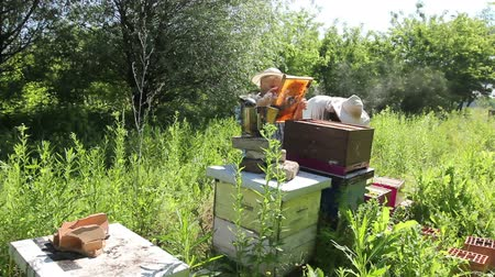улей : Senior beekeepers are taking out the honeycomb on wooden frame to control situation in bee colony.