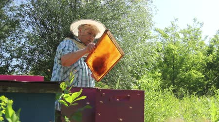 улей : Elderly woman apiarist, beekeeper is working in apiary. Barehanded senior woman, Beekeeper, is control situation in bee colony. Стоковые видеозаписи