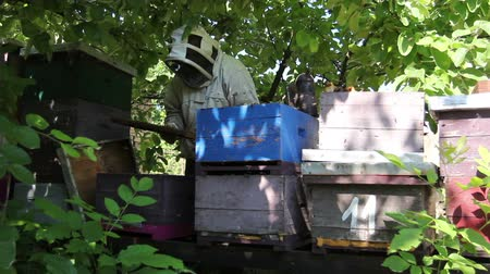 колония : Senior beekeepers are taking out the honeycomb on wooden frame to control situation in bee colony.