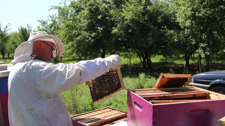 keeper : Beekeeper is taking out the honeycomb on wooden frame to control situation in bee colony. Stock Footage