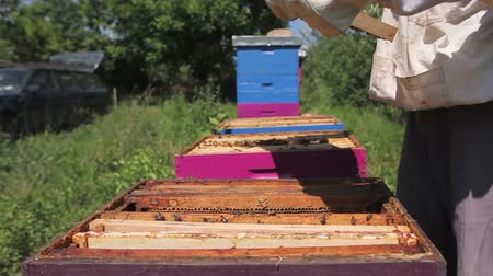 yabanarısı : Beekeeper is looking swarm activity over honeycomb on wooden frame, control situation in bee colony. Stok Video