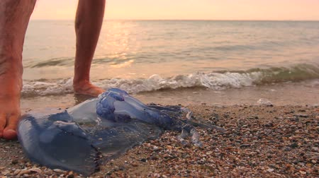 erek : Man is touching carcass of dead huge blue jellyfish barefoot with enlarged veins washed up by the sea on sandy beach.Photo - JPEG video codec