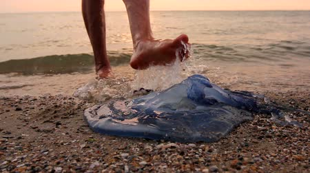 чувствовать : Man is touching carcass of dead huge blue jellyfish barefoot with enlarged veins washed up by the sea on sandy beach. Photo - JPEG video codec