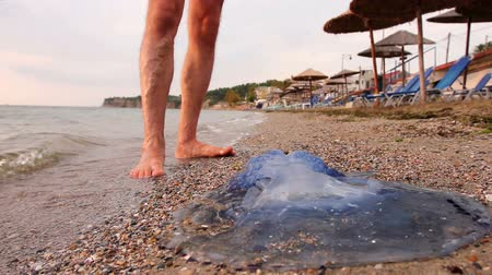 ısırgan otu : Tourist is passing by carcass of dead huge blue jellyfish, walking barefoot through shallow sea water. Photo - JPEG video codec Stok Video