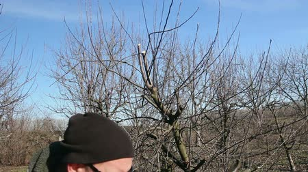 sıkıcı iş : Farmer is pruning branches of fruit trees in orchard using long loppers at early springtime. Photo - JPEG video codec